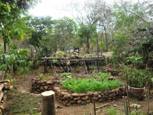 Raised garden in Limay